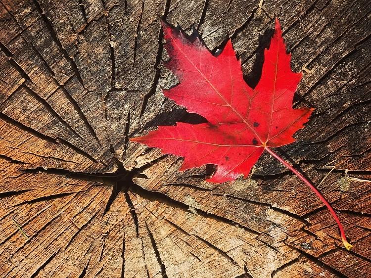 Co do zaoferowania ma Kanada